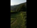 Чайная плантация краснодарского чая, фундука и грецкого ореха