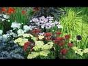 ❀ Многолетние цветы, которые сажают и пересаживают осенью