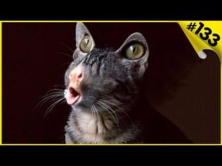 Приколы с котами и смешные кошки 2019 Смешные видео про котов с озвучкой