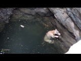 A drowning dogs desperate wish comes true