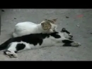 V-s.mobiочень грустное видео про кота и кошку.mp4