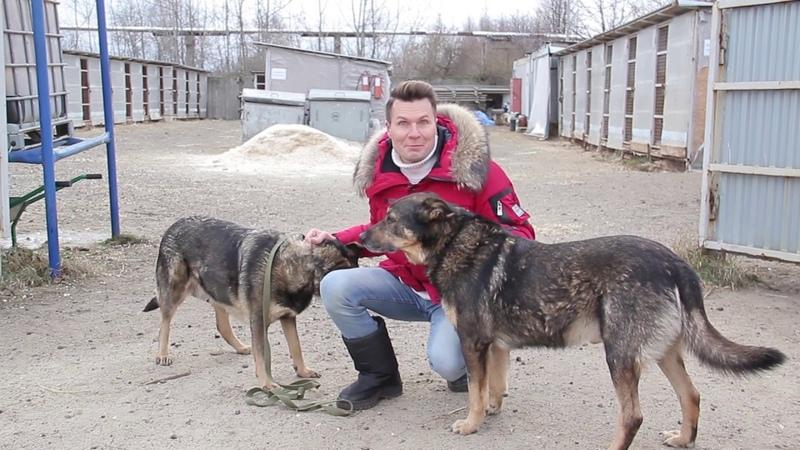 Хочу домой. Бездомным собакам Даше и Малышу нужна ваша помощь