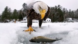 GoPro Awards Eagle Saves Fish from Cold
