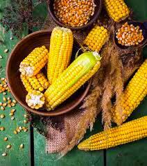 Какая польза здоровью от кукурузы