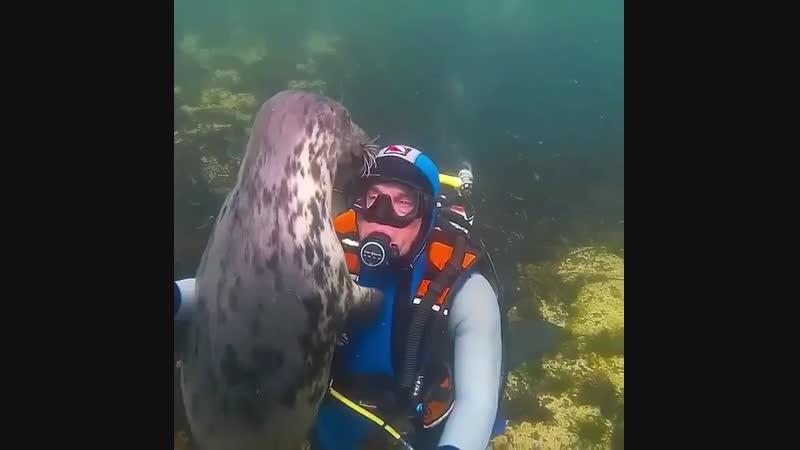 Морской котик хочет пообщаться с дайвером
