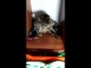 роды котят