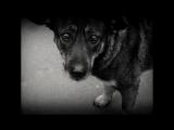 Бездомный пёс (автор и вокал Валерий Якшаров, музыка