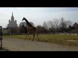 Весна в Московском зоопарке