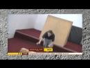 TV передача о нашей школе