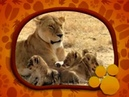 Λιοντάρια O μαγικός κόσμος των ζώων