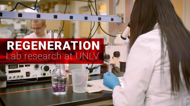 Organ Regeneration Research at UNLV