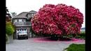 Top 15 loại cây vĩ đại, đẹp nhất hành tinh | Việt Vivu |