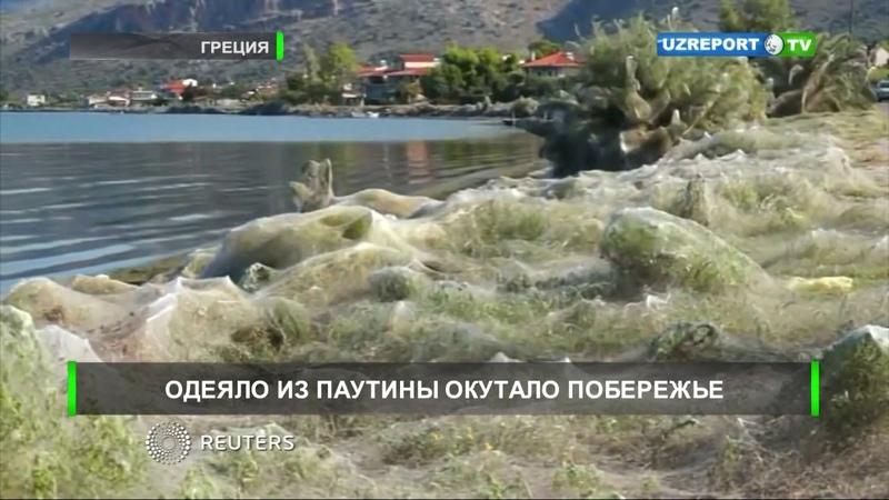 Одеяло из паутины окутало побережье города в Греции