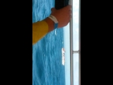 Горбатые киты, залив Самана