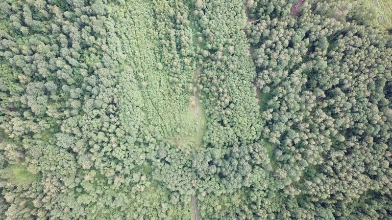 Дремучие леса Смоленской Области