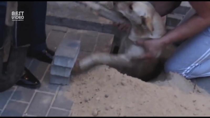 Спасение собаки замурованной рабочими