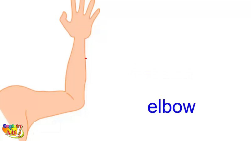 Learn English Vocabulary - Hand And Arm - Human Body Parts