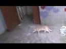 001_кошки ивсе животные любять гроша -это у д и в л я е т ь ПРОРОКА САН БОЯ