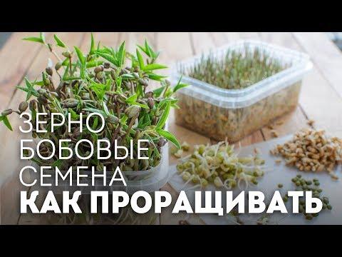 Как прорастить зерно, бобовые, семена🍴Жизнь - Вкусная!