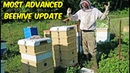Most Advanced Beehive Update 2