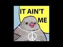 Vietnam bird meme