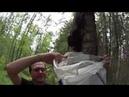 Сбор чаги - лечебного гриба с двух берез в Тосненском лесу Ленинградской области России