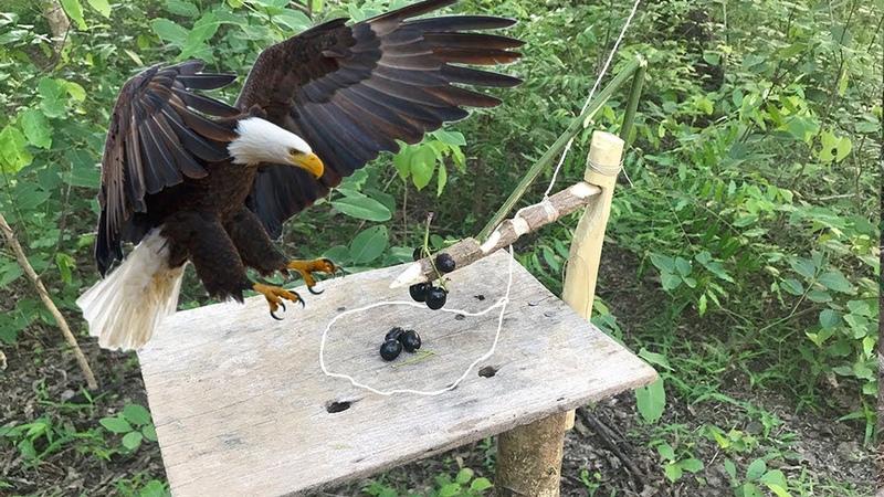 Best DIY Bird Trap ( Part 2 ) / How to Make DIY Bird Trap by Smart Boy