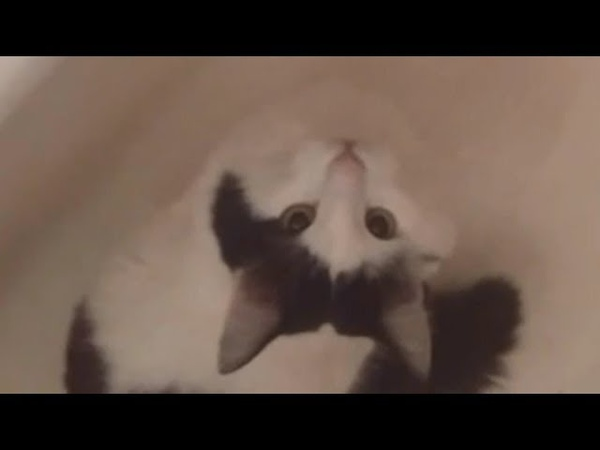 Cute Cat Drink Tap Water I 냥이멍이 I Cat Compilation