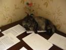 кошка Пуся на нотах) в доме композитора грех не поумываться на нотах