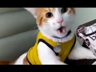 Гооол! Котик кричит гол!))