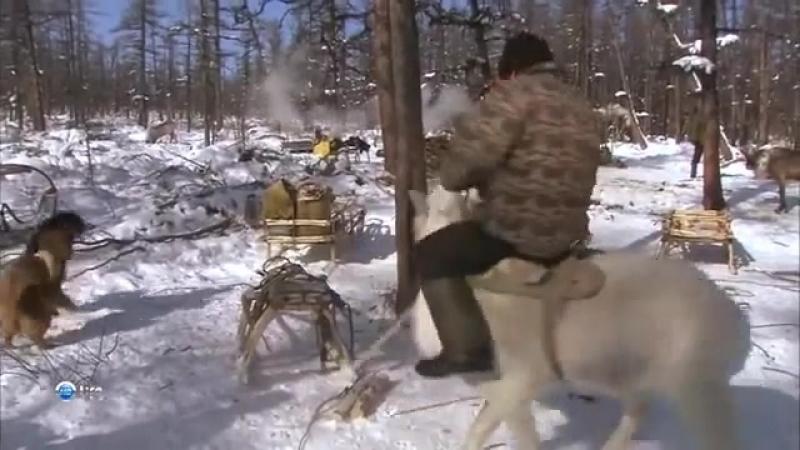Последние племена Эвенки Объездить молодого оленя mp4