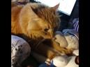 2941). 10.11.2017 - Котик Марат (теперь Бублик-Буб) уехал домой! (видео из дома)