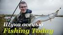 Ловля щуки осенью Топовые воблеры и железо Fishing Today