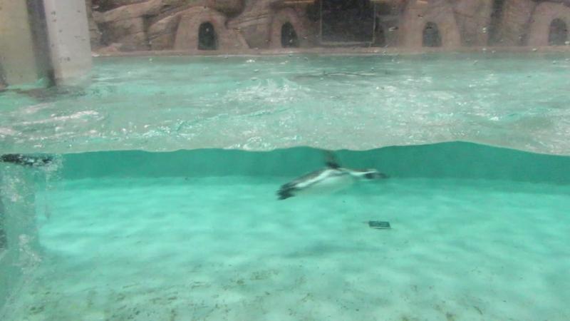 Пингвины 9