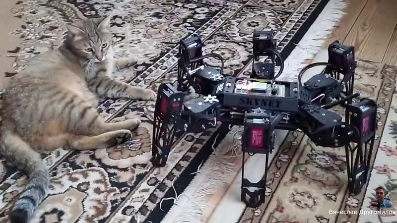 Ленивый кот преградил дорогу роботу