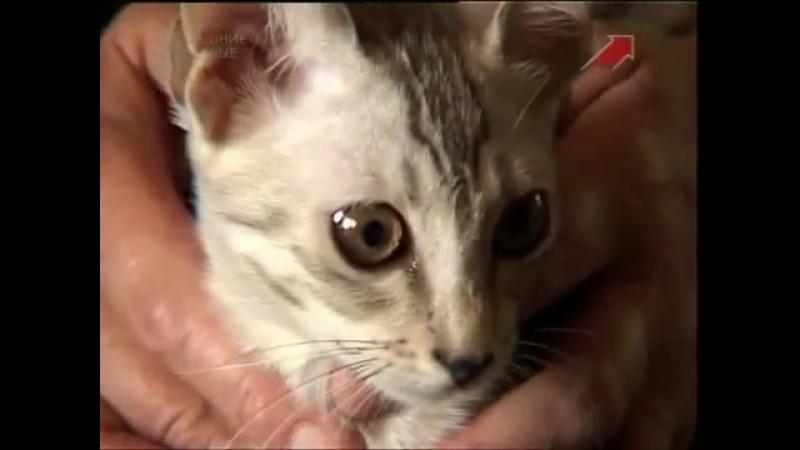 Все о кошках. Саванна (2012)-spyan--scscscrp