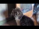Эльдар Богунов снимает котенка!