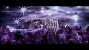 CELLAR DARLING - Insomnia (OFFICIAL VIDEO)