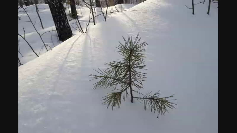 живописные снег и ёлочка с натуры