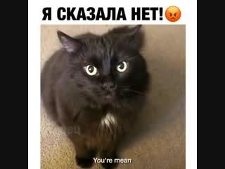 Никогда не говорите коту нет 😂
