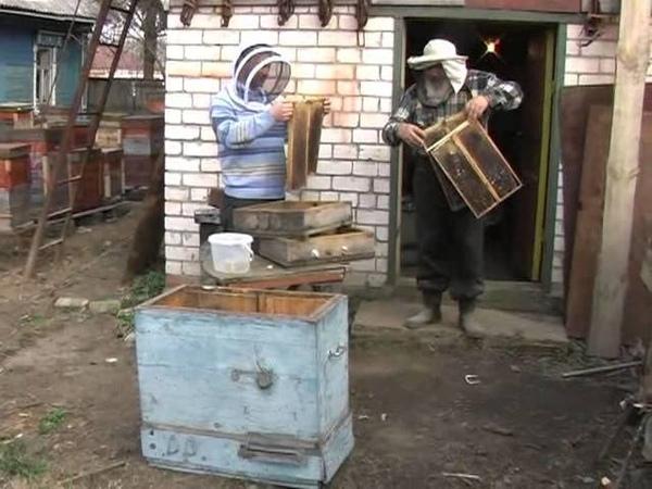 Секреты мастерства нижегородского пчеловода