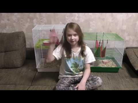 Почему пищат крысы Как расшифровать крысиный писк