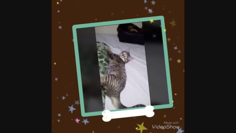 Кошечка Лилу ищет дом🏠