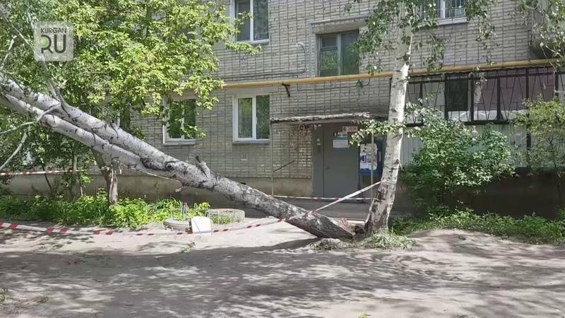 Во дворе по Радионова огромное дерево повалилось на бок, место оцеплено