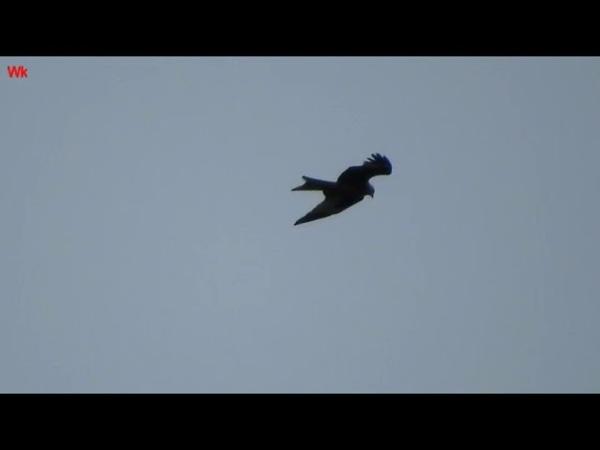 Хищник в небе-3 (анг. Raubvogel im Himmel-3) (анг. Bird of prey in the sky-3)