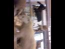 08 07 2018 питерский зоологический музей чучела зверей и птиц на первом этаже в центральном помещении