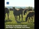 FL ● Семейная ферма Кускашевых Красноярский край Ермаковский р н