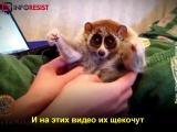 Чем расплачиваются животные за «мимимишные» ролики