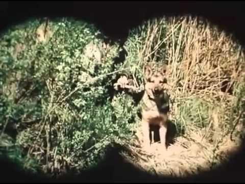 Фрагмент из художественного фильма Гений