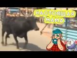 Почему эта корова бежит за машиной?